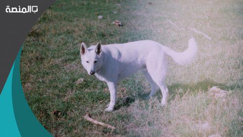 تفسير رؤية كلب أبيض في المنام