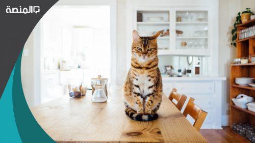 حلمت اني اتحدث مع قطة