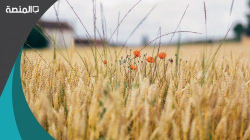 تفسير رؤية الحبوب او البثور في المنام لابن شاهين