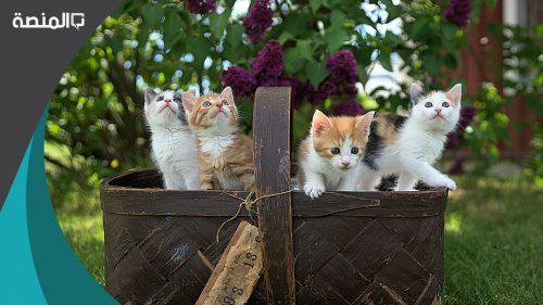 اسماء قطط اناث جديدة 2021