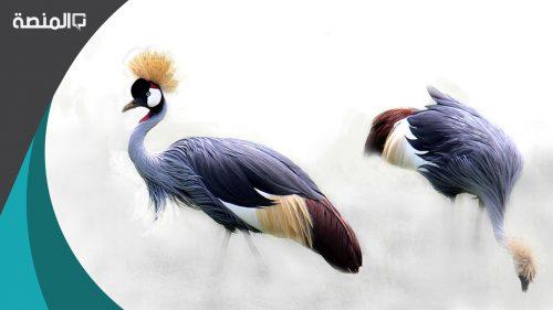 تفسير حلم رؤية طائر الكروان في المنام