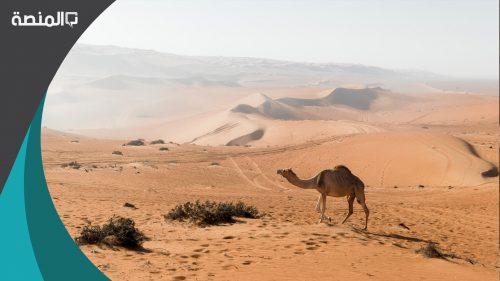 تفسير رؤية حلم الرمال