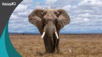 تفسير رؤية الفيل في المنام لكبار المفسرين