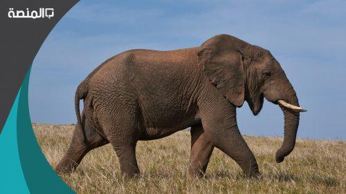 تفسير حلم رؤية الفيل في الحلم