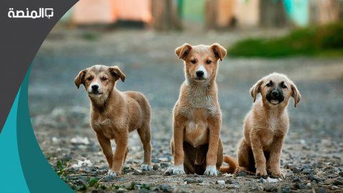 تفسير رؤية براز الكلاب في المنام لابن سيرين