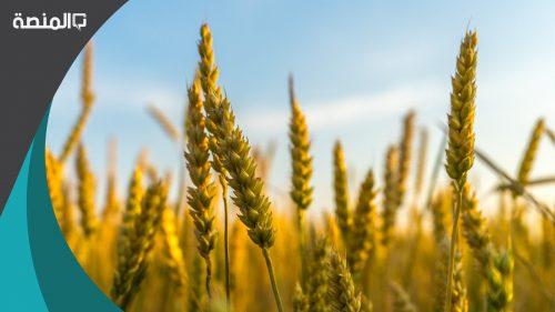 اهم المحاصيل الزراعية بالقصيم