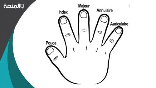 اسماء اصابع اليد بالانجليزي