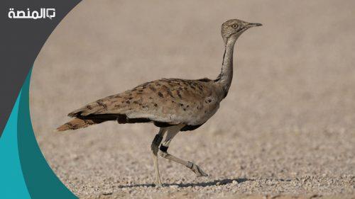 اسماء الطيور الموجودة في الامارات
