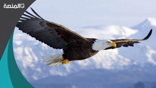 تفسير رؤية طائر كبير في المنام لابن سيرين