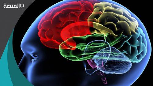 كم عدد اللترات التي يحتاجها الدماغ البشري من الدماء يوميا لكي يعمل