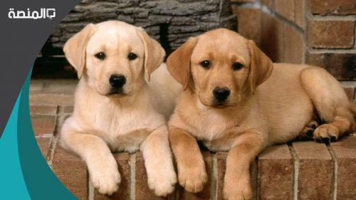 اسماء كلاب اناث ذكور 2021