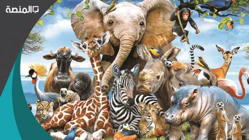 كيف تساعد المهارات والقدرات الخاصة الحيوانات في بيئات مختلفة؟